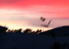 windy sunset (Ingrid Friis Photo) Tags: sunset red windy solnedgng blsigt