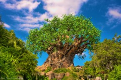 Discovery Island (Scottwdw) Tags: travel blue vacation sky animals clouds orlando nikon florida carving waltdisneyworld hdr treeoflife disneysanimalkingdom discoveryisland photomatix unitiedstates d700 scottthomasphotography afsnikkor28300mmf3556gedvr