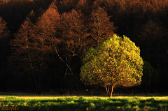 (tozofoto) Tags: trees light shadow nature colors forest canon landscape spring hungary april zala tozofoto saariysqualitypictures fleursetpaysages