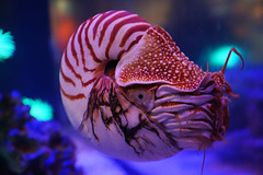 2012-04-15 San Francisco, Golden Gate Park 093 California Academy of Sciences, Steinhart Aquarium