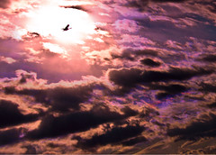 Sunset of the Refuge Sky (Rusty Russ) Tags: sunset arizona sky sun france west color clouds photoshop river island geese yahoo google flickr image plum saturation rise antartica hue parker bing newburyport refuge facebook stumbleupon daum