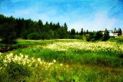 South Ural