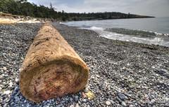 Surf tossed (Andrew E. Larsen) Tags: driftwood
