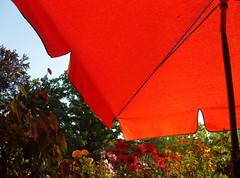 """""""Balkonien"""" ... (bayernernst) Tags: berlin rot deutschland sommer balkon blumen juli sonne 2012 balkonblumen 25072012 sn202120"""