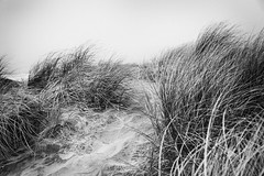 ...the beach waits like an altar (catlucia) Tags: beach grass northerncalifornia coast sand dune oceanbeach sfist beachgrass outerlands