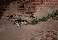 Guard (Arina Deykina) Tags: dog animal sigma belarus 1224