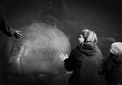 Happy hippo (lritul) Tags: bw animal zoo hippo