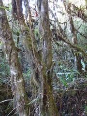 Nature in Machu Picchu