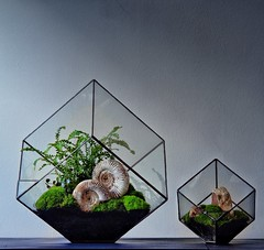 Hermetica London terrarium making classes (Ken Marten) Tags: