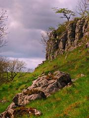 Serenity is a soul tree survivor (Dazzygidds) Tags: lighting derbyshire bloom framing atmospheric peakdistrictnationalpark nationalnaturereserve haydale limestoneway limestonebluff atmosphericclouds