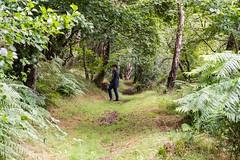 Abriachan Wood, Loch Ness, Scotland (Rosarian49) Tags: wood forest scotland oak hazel ash birch lochness inverness alder woodlandtrust nativetrees nativewoods rosarian49 abriachanwood