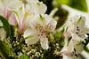 Flor (XXI) / Flower (XXI) (Calvipitecus) Tags: chile flor canoneosdigitalrebelxt jupiter37a astromelia calvipitecus