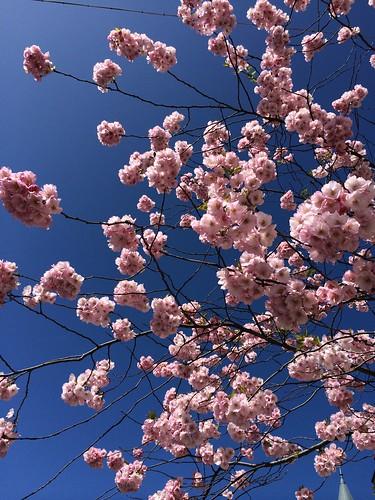 Våren är här