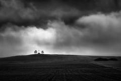 Zwei Bäume und ein Kreuz (StefanB) Tags: sky bw tree monochrome clouds germany landscape deutschland google flickr kreuz geotag bäume treescape ries schwaben 2013 em5 500px 1235mm silverefexpro flvonmirikr 500pxstore