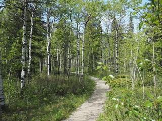 Barrier Lake trail in Alberta #explorealberta #kananaskis #mft #m43 #olympusOMD #olympusem5 #olympus