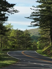 The Road Goes Ever On and On (AluminumDryad) Tags: road mountains green forest bend curve blueridgemountains pinetrees blueridgeparkway skylinedrive shenandoahnationalpark