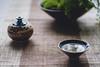 Taste Zen In Tea (Digging Dog) Tags: cup ceramic asian tea chinese peaceful zen bonsai serene wabisabi eastern chill tranquil incense tenmoku 侘寂