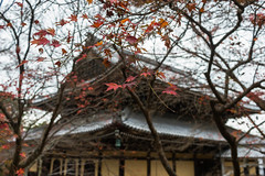 BM7Q2542.jpg (Idiot frog) Tags: autumn red color building green fall leaves yellow japan season japanese maple kyoto seasonal nanzenji