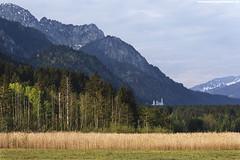 SCHLOSS NEUSCHWANSTEIN IM MORGENLICHT (PADDYSCHMITT.DE) Tags: berge binsen schlosneuschwanstein bergkulissebeifüssen