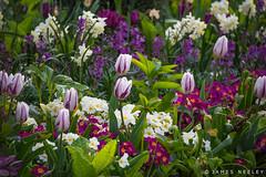 Color of Spring (James Neeley) Tags: flowers london spring hydepark jamesneeley
