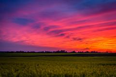 Amazing sunset... (Benjamin Merceron) Tags: pink sunset orange sun nature field rose 50mm soleil nikon colours purple couleurs coucher violet champ coucherdesoleil d5200