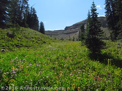 Ascending Upper Darby Canyon via the Trail Route (Anne's Travels 4) Tags: wildflowers wyoming tetons grandtetonnationalpark jedediahsmithwilderness darbycanyon upperdarbycanyon