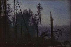 Night Trip III (shawnraisin d+p) Tags: wood trees tree weather fog mystery night forest woodland dark woods solitude mood forestry magic dream foggy aged distressed mystic coniferous highiso conifer enchanting shawnwhite fujifilmxt10