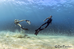 Photo shoot with Emily (bodiver) Tags: ocean fish hawaii ambientlight wideangle freediving mermaid kona kailua freedivers akule peopleunderwater baitball