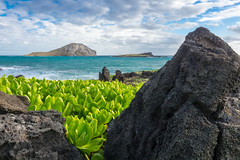 Island View (Jeronimo Photography) Tags: ocean sea sky plant green rock clouds island hawaii bay rocks paradise view pacific oahu outdoor maunalua micro43 olympusomdem10 olympused1240f28pro