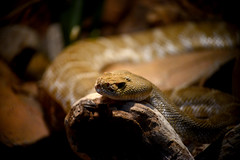(John Donges) Tags: philadelphia animals zoo reptile snake philadelphiazoo 7184