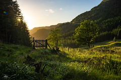 Light from the setting sun. (huddart_martin) Tags: trees sunset sunlight mountain nature grass norway landscape countryside norge gate minolta path naturallight bergen sunsetlight sonya99