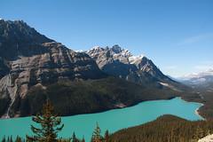 Peyto Lake (okidoki35) Tags: lake canada canon outdoor xs peytolake peyto canadianrockies 1000d
