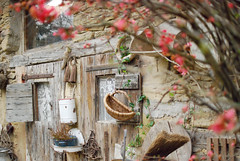 La buanderie (Siouz) Tags: wood old tree floral vintage garden countryside spring exterior basket retro quince shabbychic frenchcountryside buanderie cottagechic quincetreeofjapan montchenu