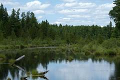 Big Arbor Vitae Lake Marsh (BenG94) Tags: wisconsin canon marsh northwoods arborvitae 60d canon60d bigarborvitaelake