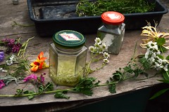 Tincture making from foraged flowers in the garden (Permaculture Association) Tags: wales gathering ecovillage permaculture 2016 lammas cyrmu paramaethu