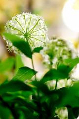 PhoTones Works #1021 (TAKUMA KIMURA) Tags: plant flower nature small    kimura ep3 takuma    zd50 photones