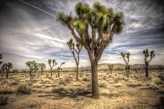 2012 Esri Partner Conference - Palm Springs (Esri) Tags: gis joshuatree epcps esripartnerconference