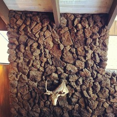 Deer (Artbandito) Tags: wall cabin head stones tahoe taxidermy deer mantle instagramsquare