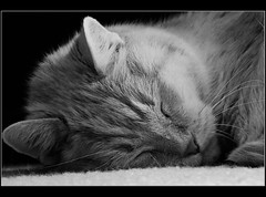 sleeping blackandwhite cat fuji seamus catnap hs20exr