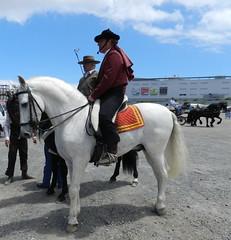 Caballos y carretas 11 V Feria de Abril Las Palmas de Gran Canaria 2012 (Rafael Gomez - http://micamara.es) Tags: las horse de caballos abril feria v gran canaria cultural palmas asociacin carretas