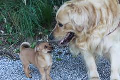 incontro con un marmocchio perso nel bosco (Danilo.......e Paco) Tags: dog cane