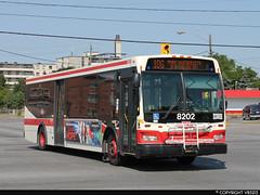 Toronto Transit Commission #8202 (vb5215's Transportation Gallery) Tags: toronto ttc transit orion ng commission vii 2010