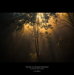 120 Quotes project | Quote 105 (Musaad (CJ)) Tags: morning mist tree grass fog sunrise woods forrest magical