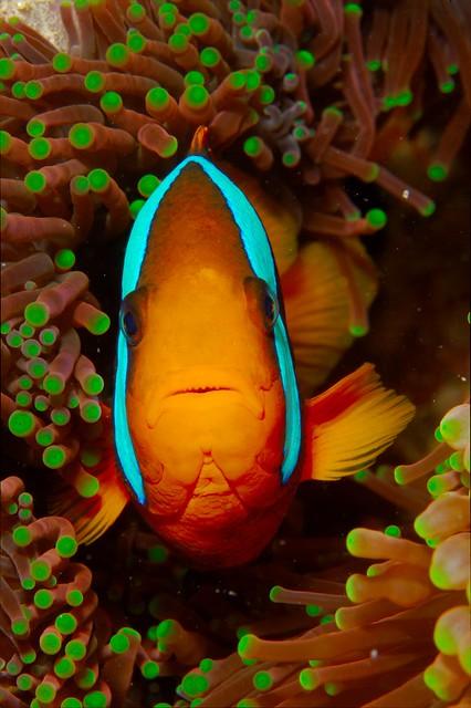 underwater australia scuba diving queensland greatbarrierreef marinelife