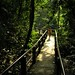 Walking pathway, Khao Yai National Park, Thailand