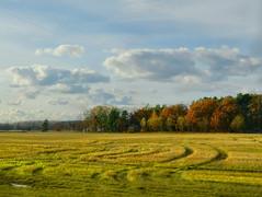 Autumnal landscape. (Bessula) Tags: autumn light sky tree nature field stubble photomix bessula rememberthatmomentlevel4 rememberthatmomentlevel1 rememberthatmomentlevel2 rememberthatmomentlevel3 creativephotocafe