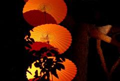 Night Lights (Sam-in-Japan) Tags: autumn fall festival lights candles fairy parasol lanterns mystical beppu oitaken sentoumyou