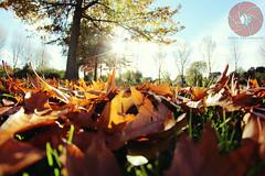 Autumn through a Fisheye (W&DY Photography) Tags: autumn holland nature netherlands canon outdoors fisheye 8mm leafs f35 600d samyang hardinxveldgiessendam