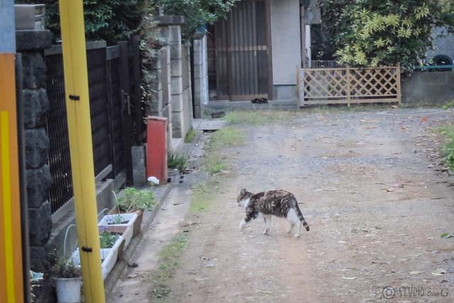 Today's Cat@2012-11-08