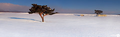 U s A n d T h e m (AnthonyGinmanPhotography) Tags: morning panorama snow field japan lonetree naganoprefecture novoflex leefilters olympuse30